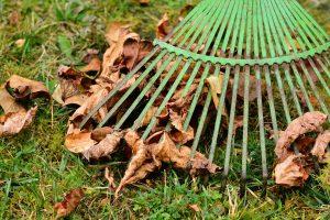 fall cleanup checklist